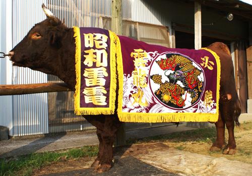 兵庫県橋本様の化粧まわしの写真